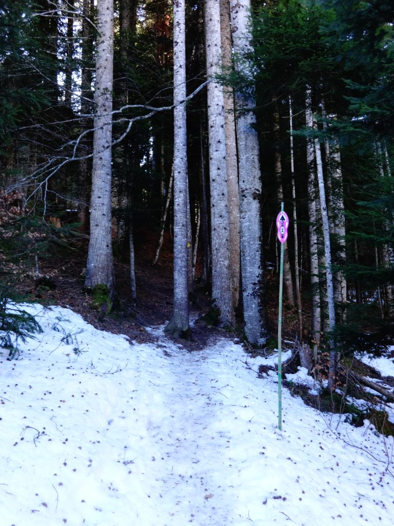 winter trail through the forest