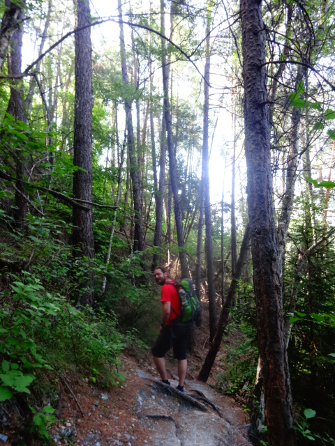 men hiking in the forest